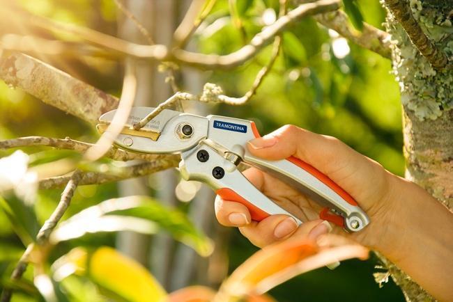 Mão segurando pássaro  Descrição gerada automaticamente com confiança média