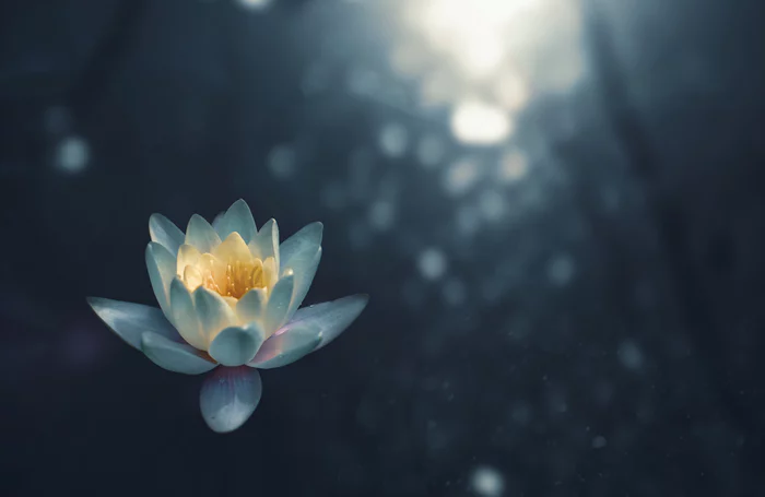Himalayan Salt Lamp Anxiety (A Guide)