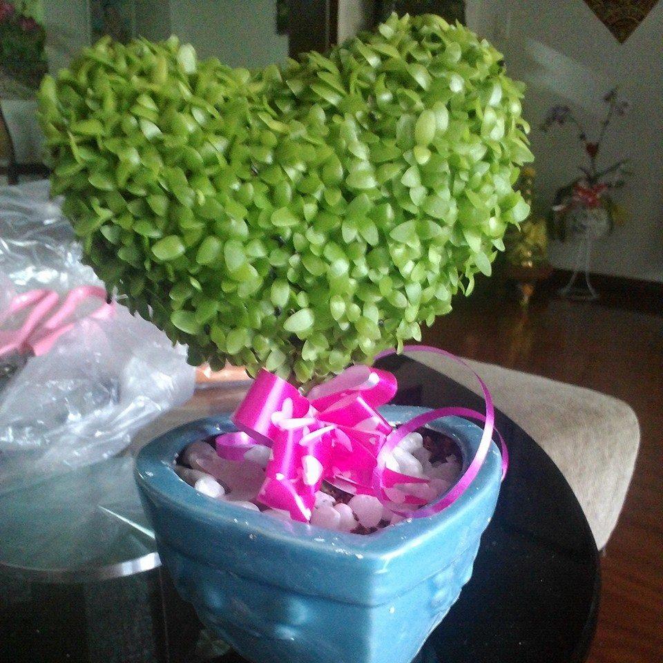 hình ảnh cây may mắn hình trái tim