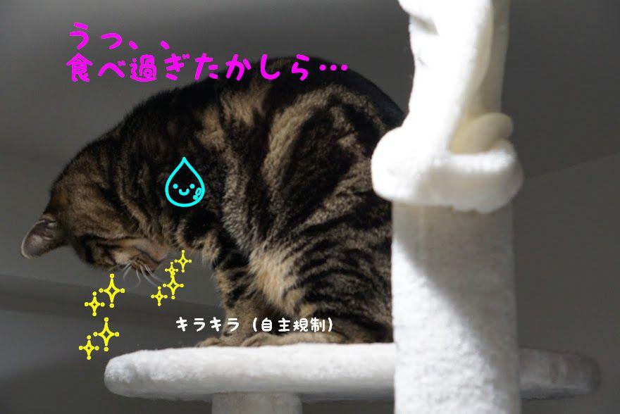 猫が吐いても大丈夫な場合と危ないケースとは?嘔吐する原因と対策について