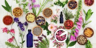 The Power of Herbal Remedies: 10 Herbs You Should Know   Savvy Rest