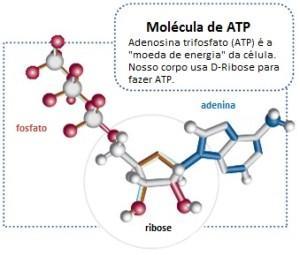 ATP portugues