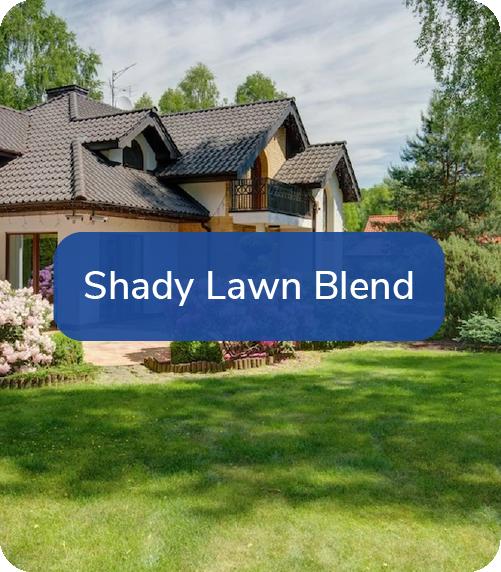 shady lawn blend