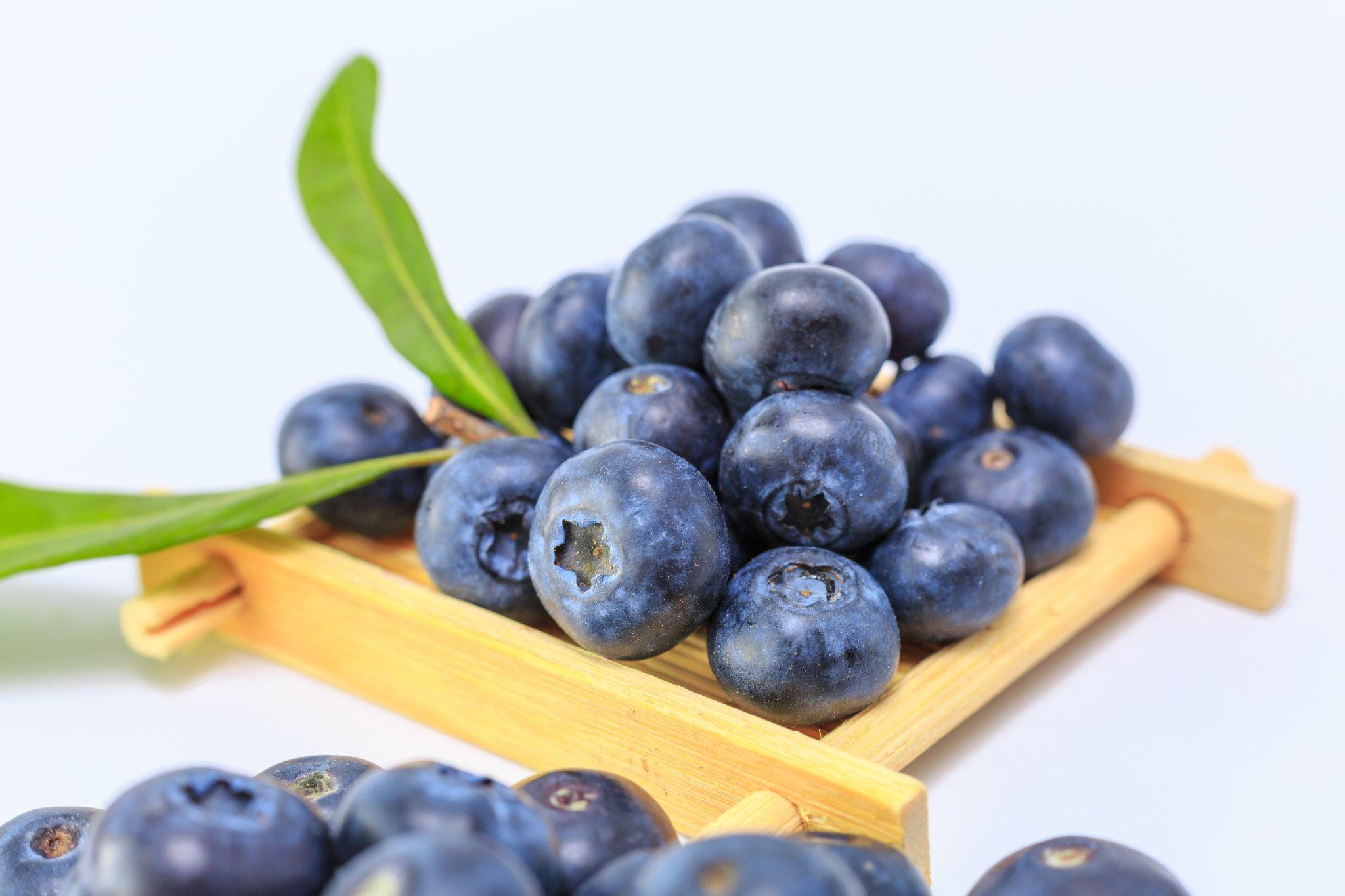 Blueberry, blueberries and memory, blueberries brain function