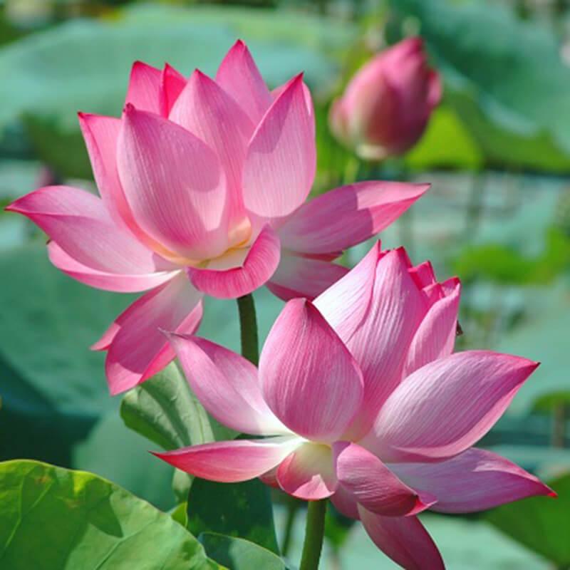 tùy mùa mà dâng hoa cúng khác nhau, nhưng cơ bản vẫn là cúc, hồng, sen, huệ