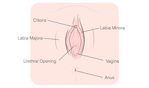 how-to-finger-yourself-vagina-diagram
