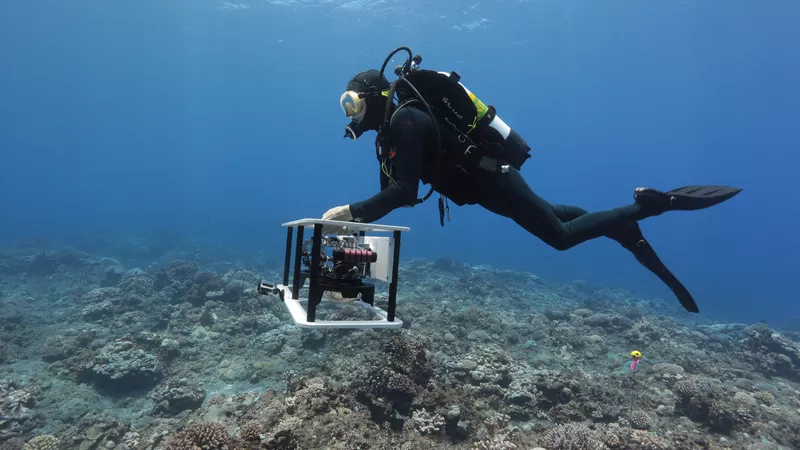These 3D maps of coral reefs may help us save them