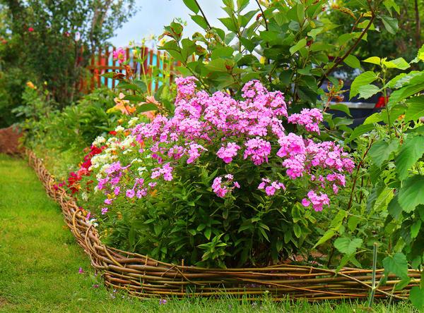 Перепланировка цветника в августе