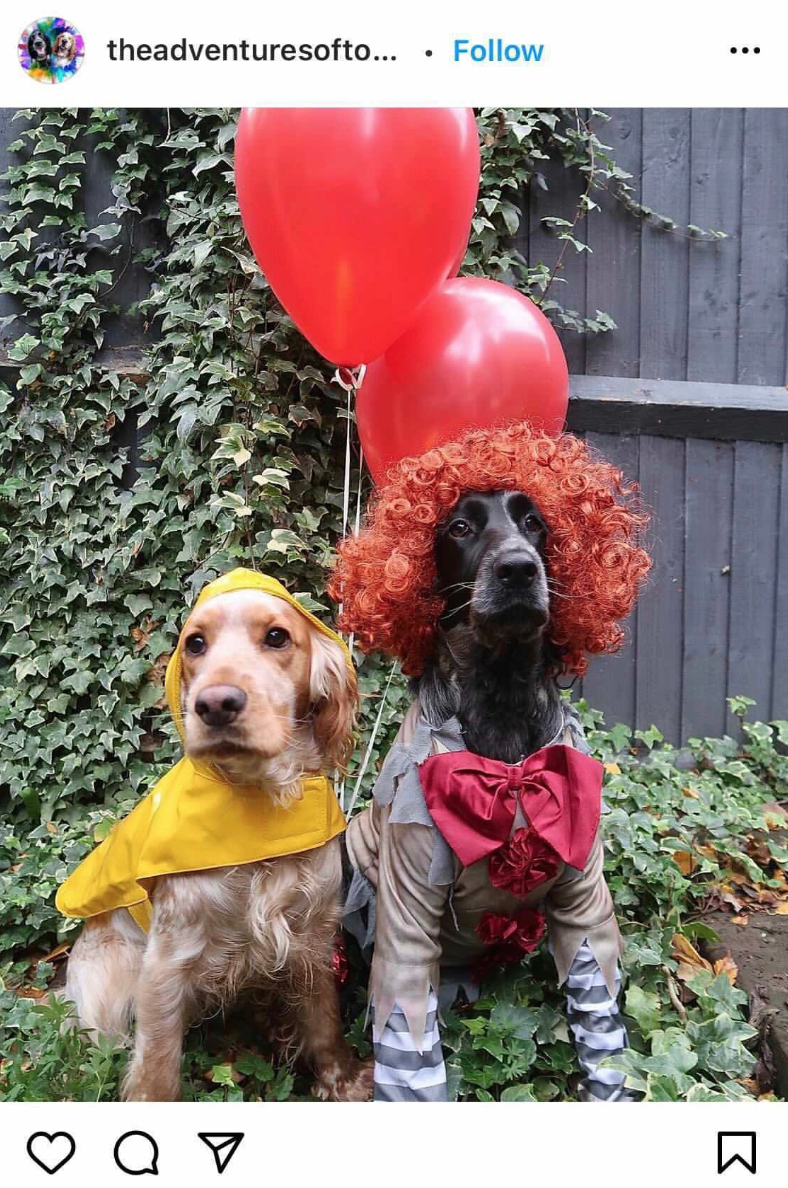 It Movie Halloween Costume Ideas For Dogs