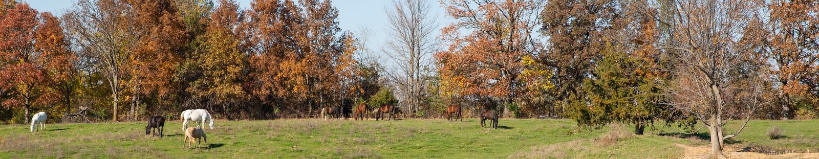 pasture at guardian oak