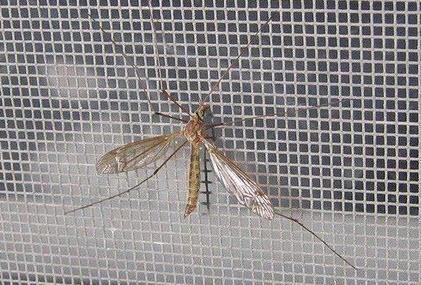 lưới chống côn trùng tphcm