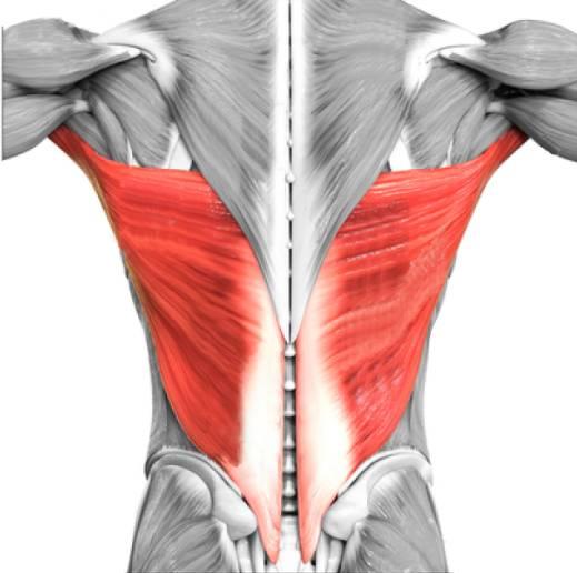 identificacion musculos dorsales