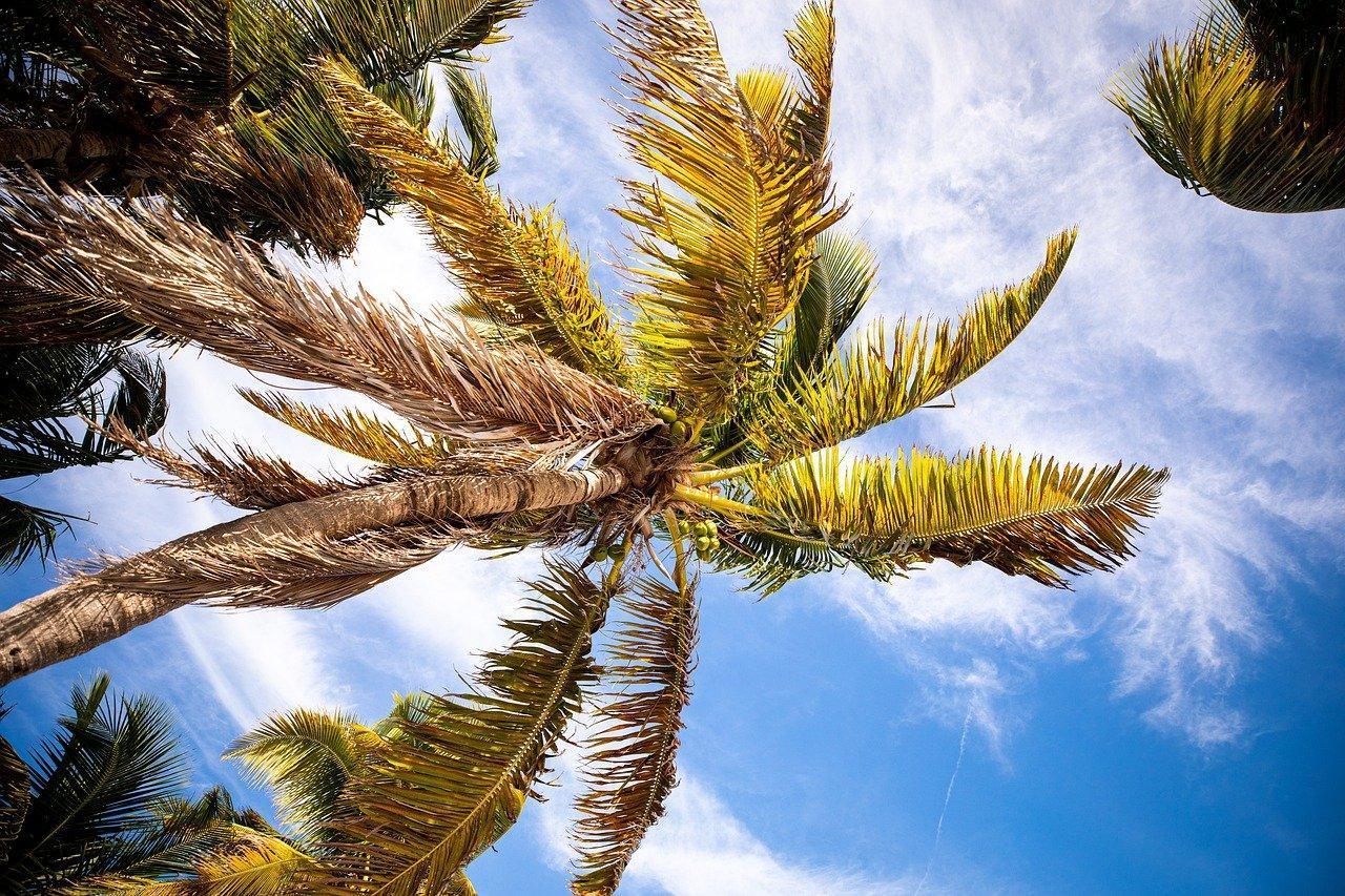 Obraz zawierający drzewo, niebo, zewnętrzne, roślina  Opis wygenerowany automatycznie