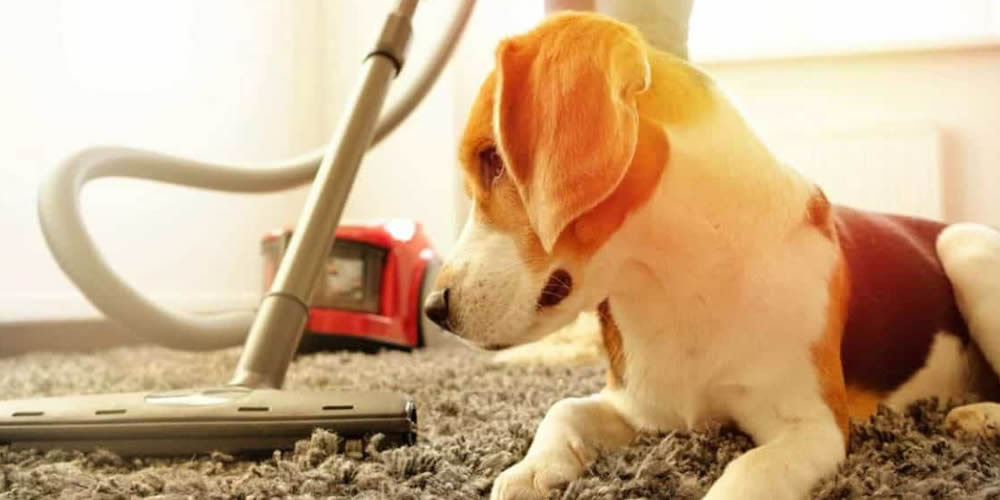 A puppy. You can remove excess hair with your vacuum cleaner.