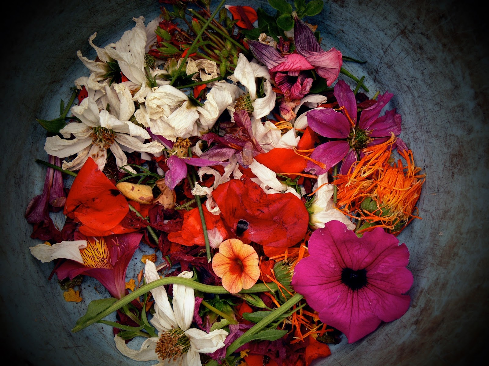 photo of a bowl of cut flower heads multiple types of flowers