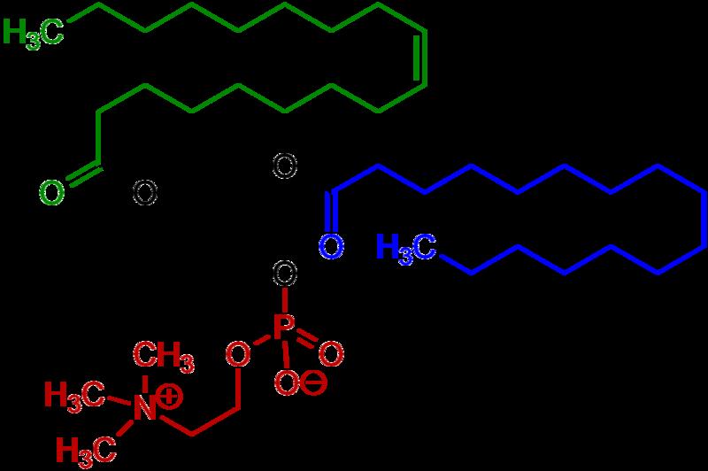 800px-1-Oleoyl-2-almitoyl-phosphatidylcholine_Structural_Formulae_V.1
