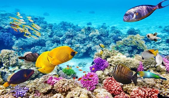 Chiêm ngưỡng rạn san hô ở Great Barrier