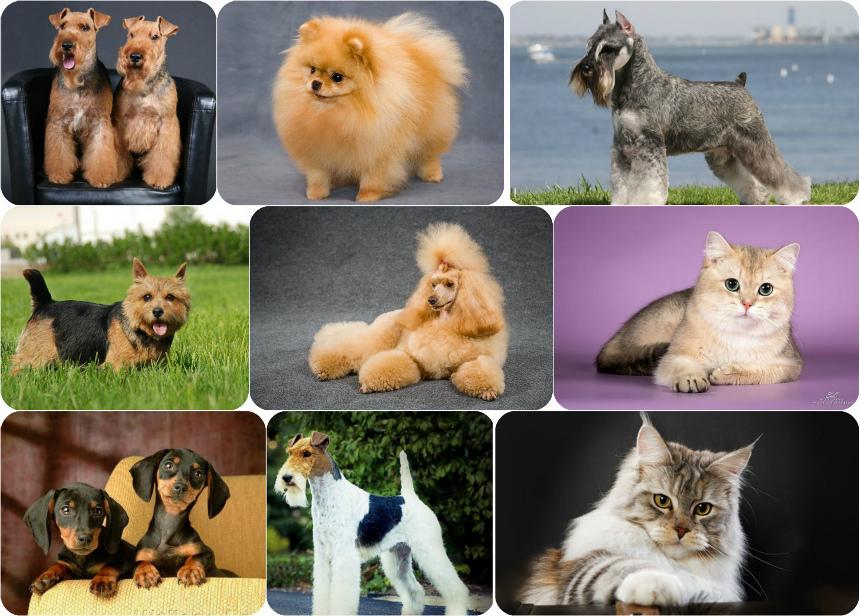 Кот и собака сервис / Cat & Dog service - Услуги11
