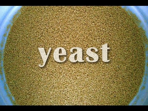 What Is Yeast?