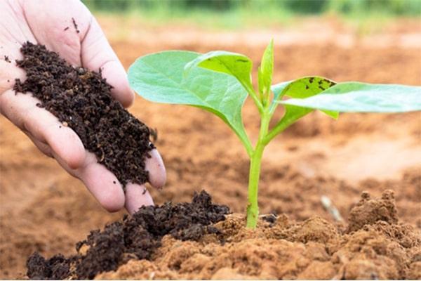 Phân Hữu cơ là gì, các loại phân bón hữu cơ tốt hiện nay