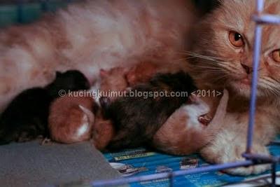 Perkembangan anak kucing, pertumbuhan