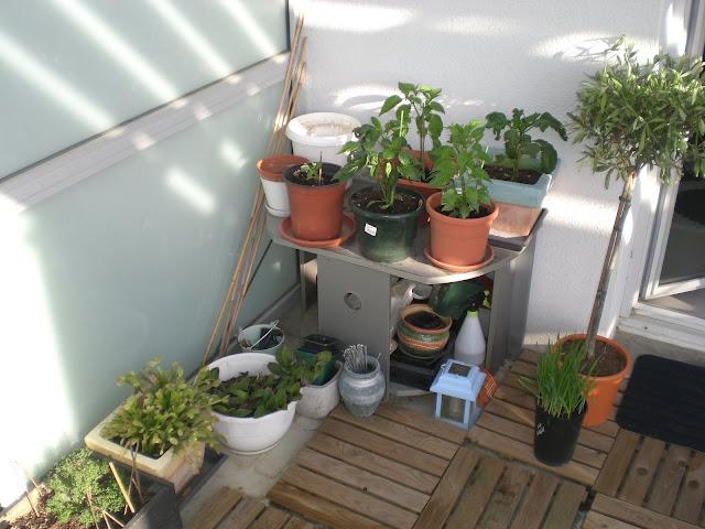 un potager pour votre balcon vue g n rale du potager au balcon. Black Bedroom Furniture Sets. Home Design Ideas