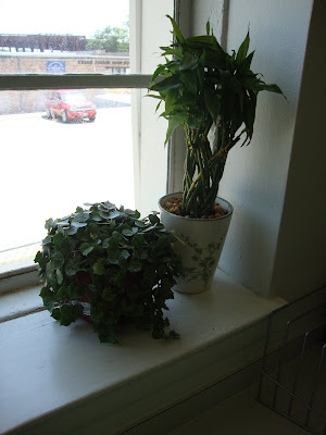 Here are two of my healthy, happy plants...not pictured: African Violets and Fern.