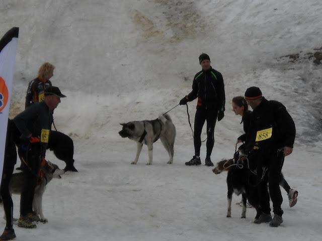 Saison Canicross 2011 DSCN5385