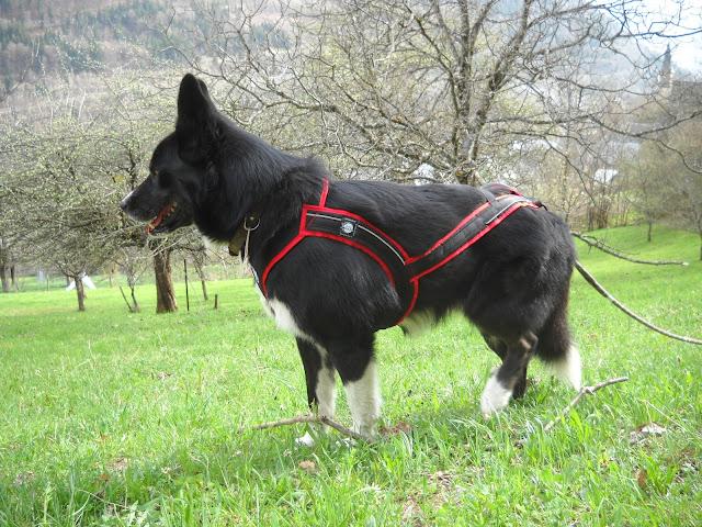 Canicross 2011 DSCN5436