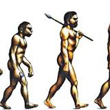 Evolución obesidad