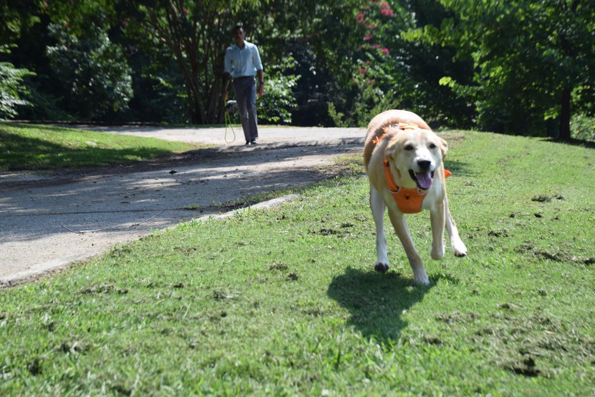 Atlanta's best dog parks