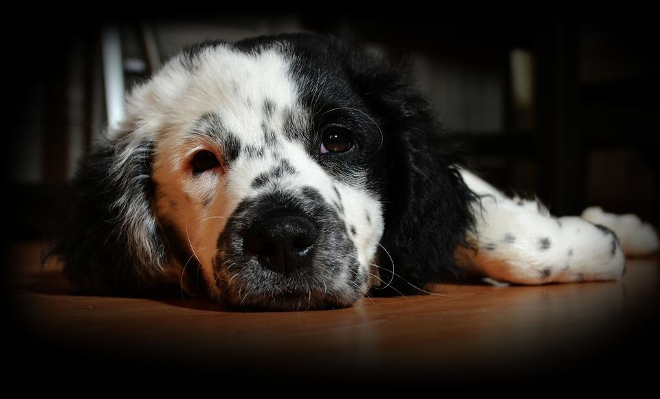 puppy-1171530_960_720.jpg