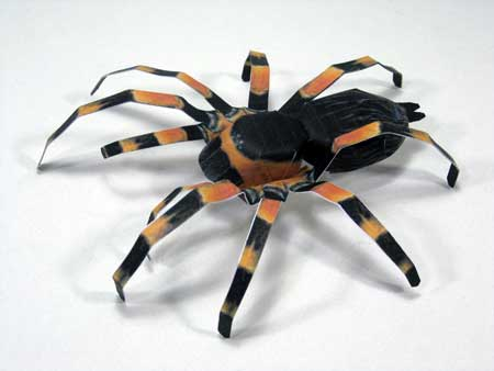 Mexican Red Knee Tarantula Papercraft