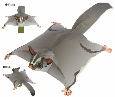 Sugar Glider Papercraft