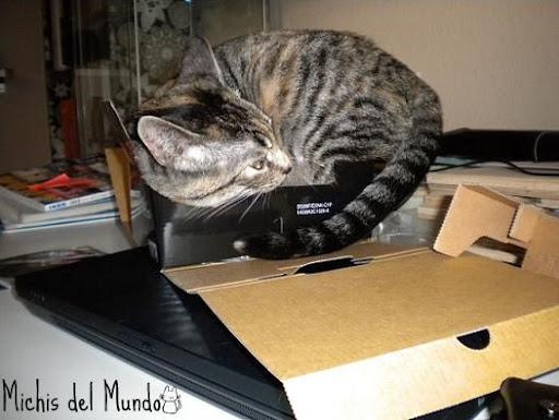 nuestros peludos y sus lugares o the cat in the box. DSCN0011