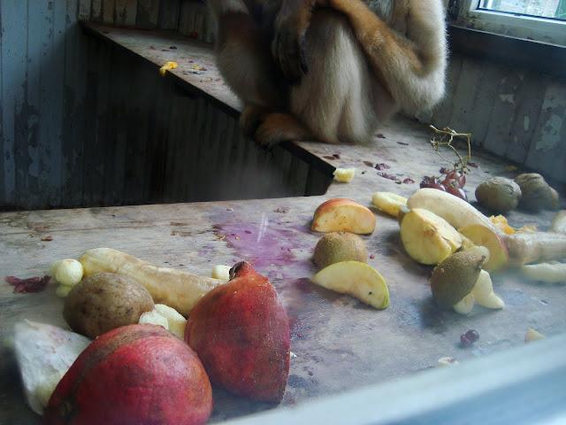 Banany, jabłka, winogrono, mango, śliwki i... ziemniaki!