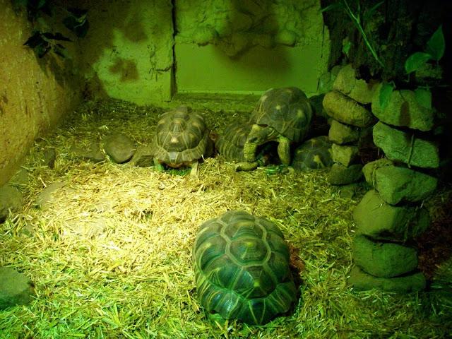 Żółw na żółwiu!