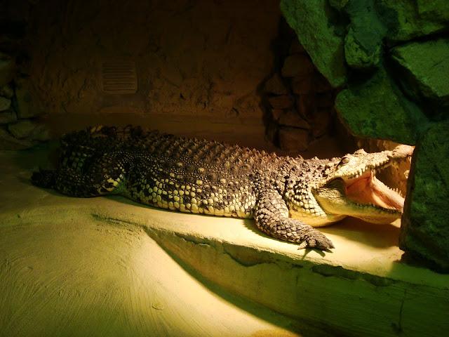 Ten sam krokodyl, poniedziałek rano