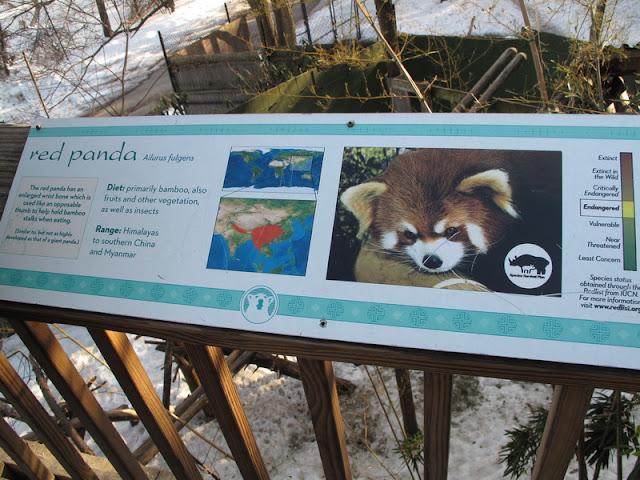 Tablica przy wybiegu pandy małej