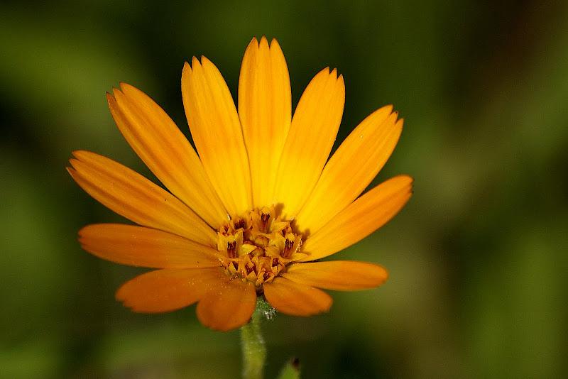 A pequena flor
