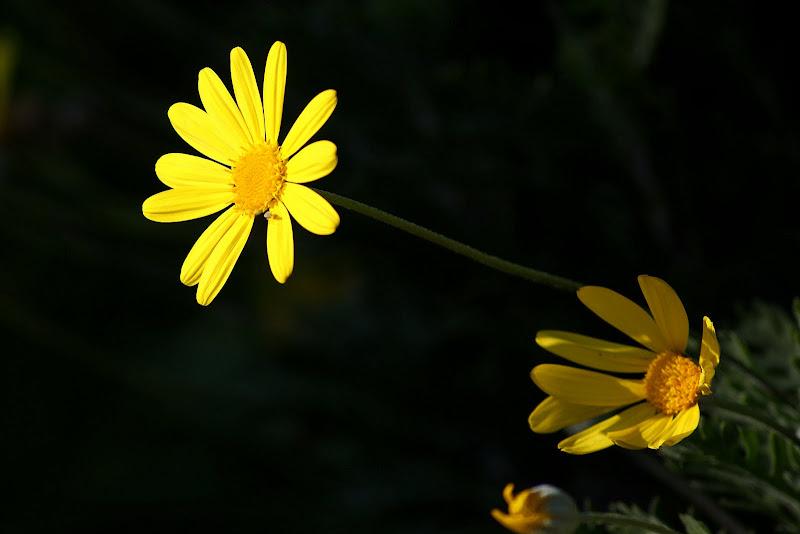 Uma flor amarela