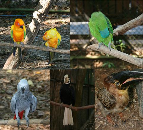 zoobic safari bird walk