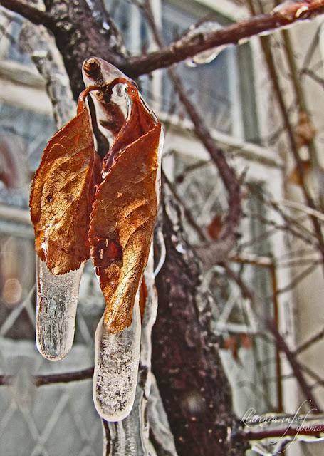 листья во льду
