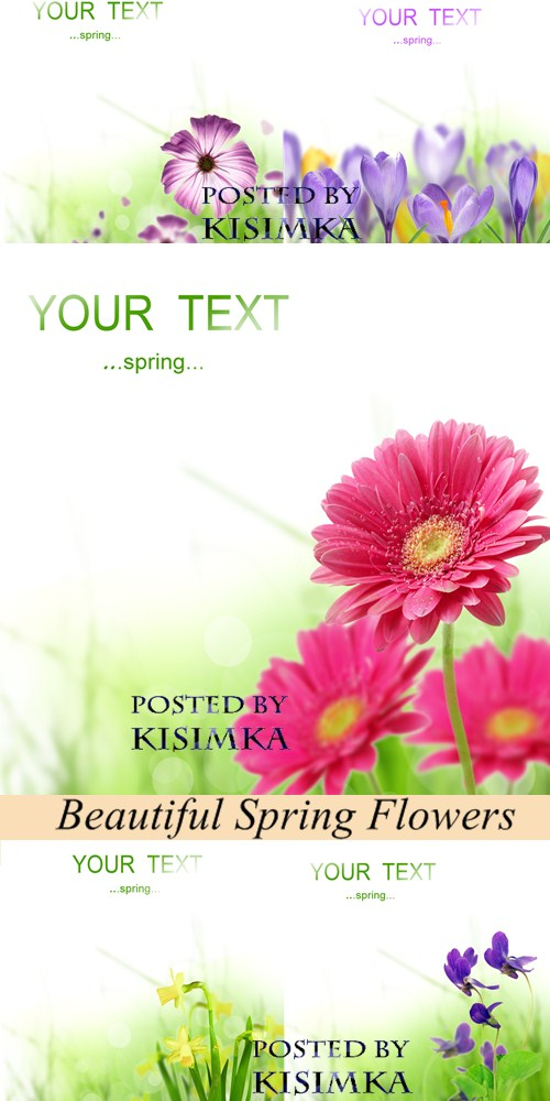 Stock Photo: Beautiful Spring Flowers Card