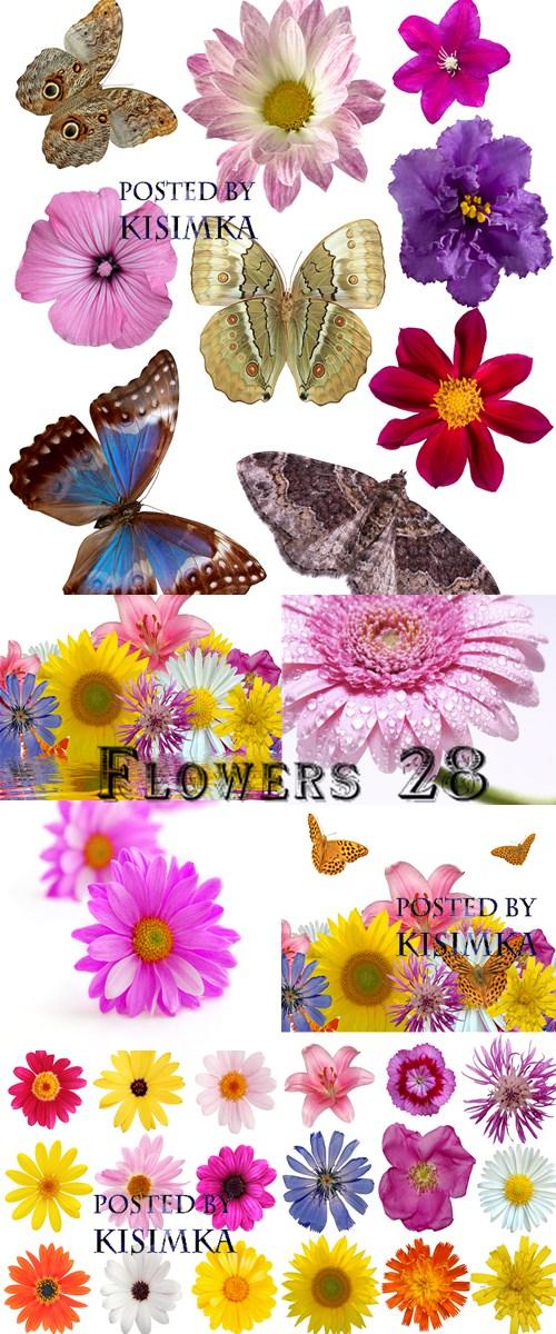 Stock Photo: Flowers 28