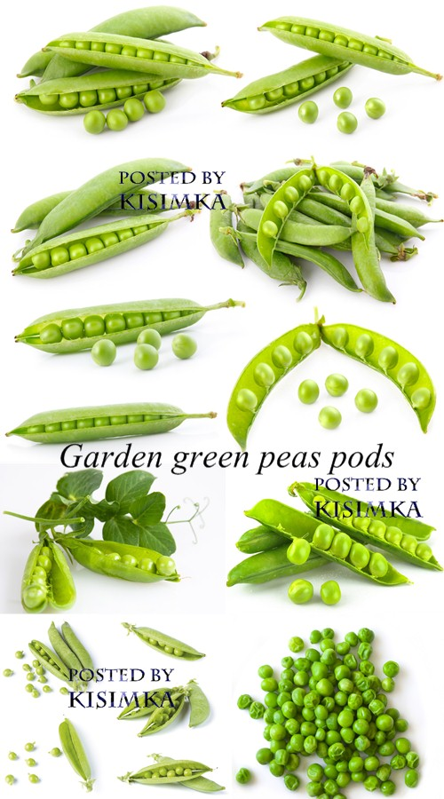 Stock Photo: Garden green peas pods