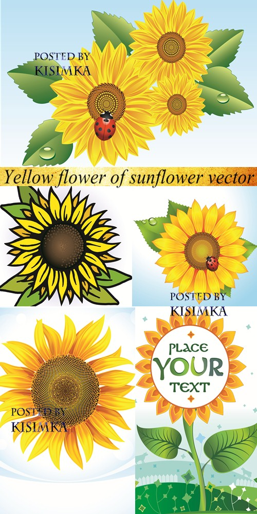 Stock: Yellow flower of sunflower vector