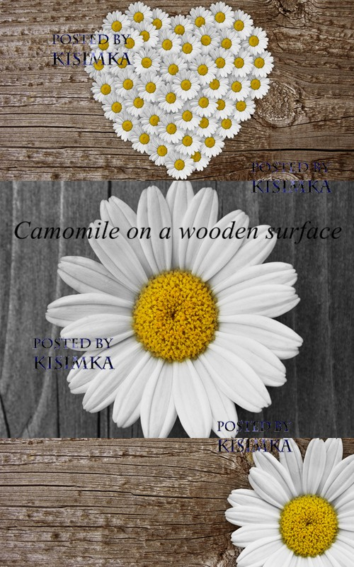 Stock Photo: Camomile on a wooden surface