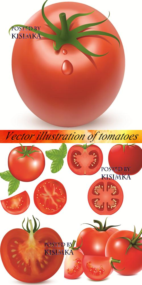 Stock: Vector illustration of tomatoes