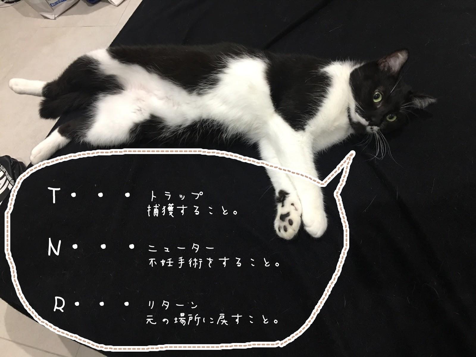 さくらねことは?耳がさくらの形の猫